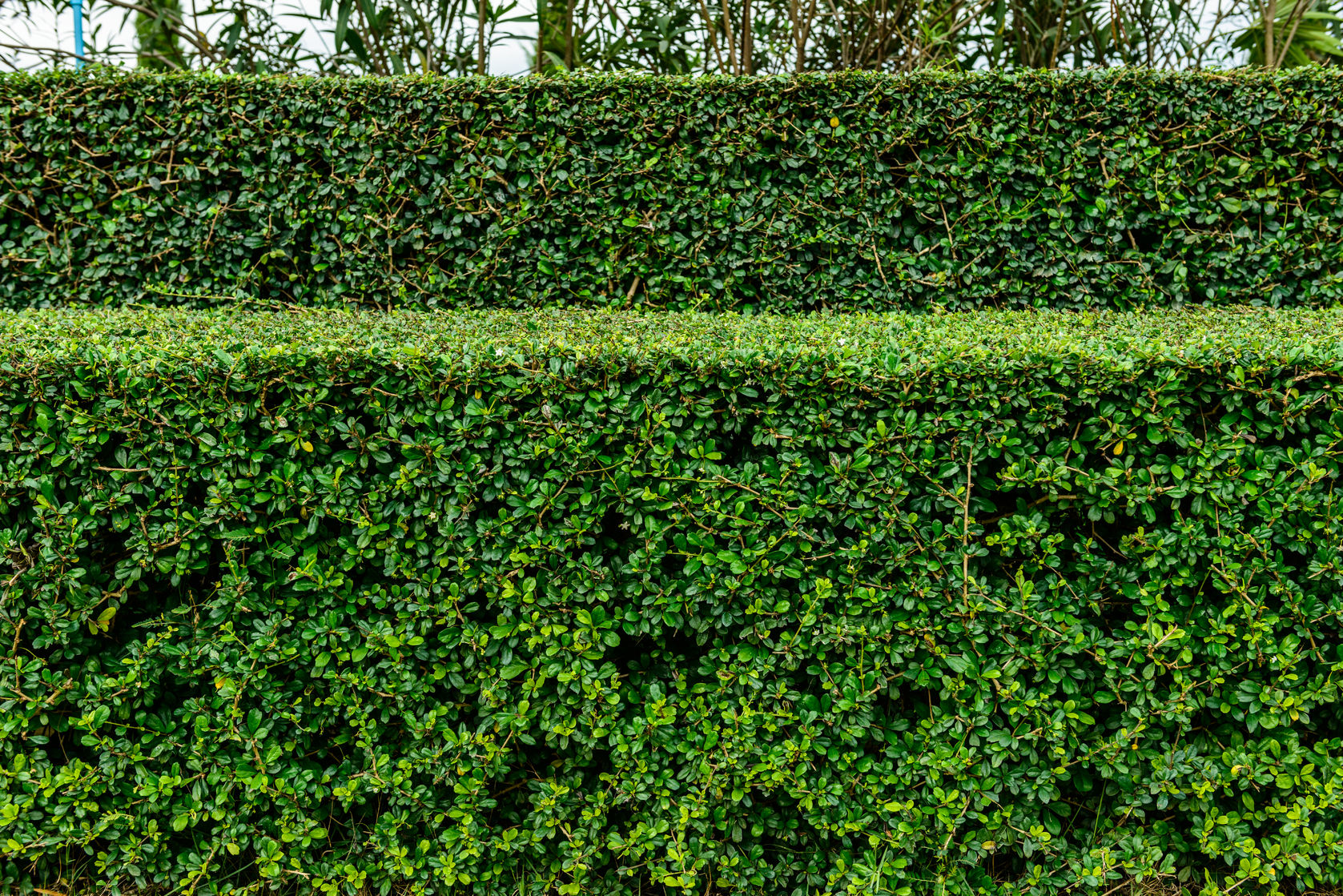 24226036 - a well landscaped and manicured hedge of bushes with mulch and grass in a step pattern