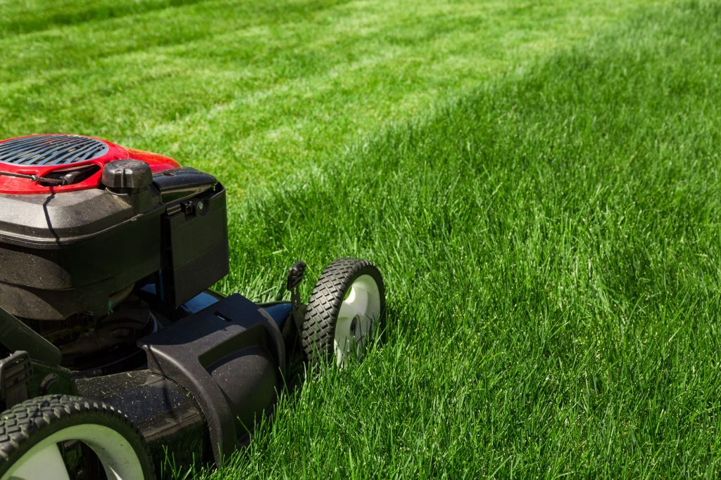 74096138 - lawn mower on green grass