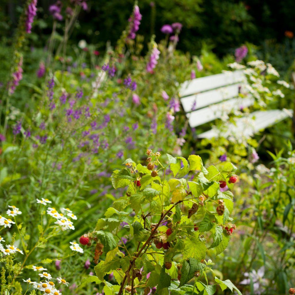 raspberry wild garden